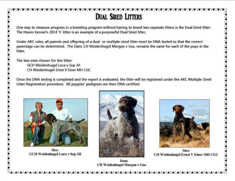 dual sired litter announcement