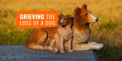 10 Tips when Grieving the Loss of a Dog