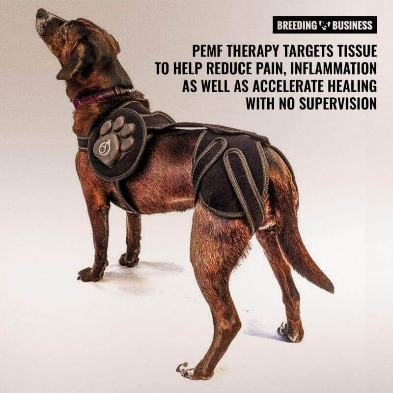 PEMF therapy for dogs