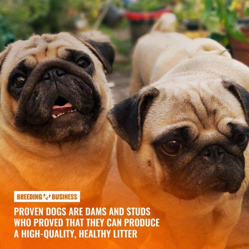 what are proven dogs
