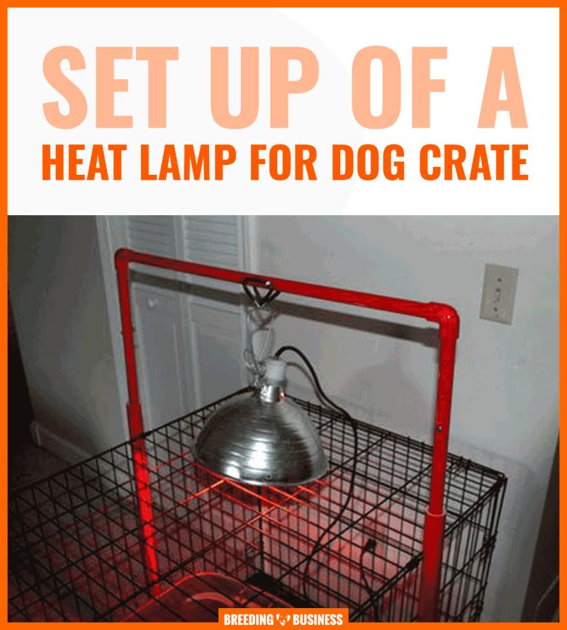 kennel heat lamp