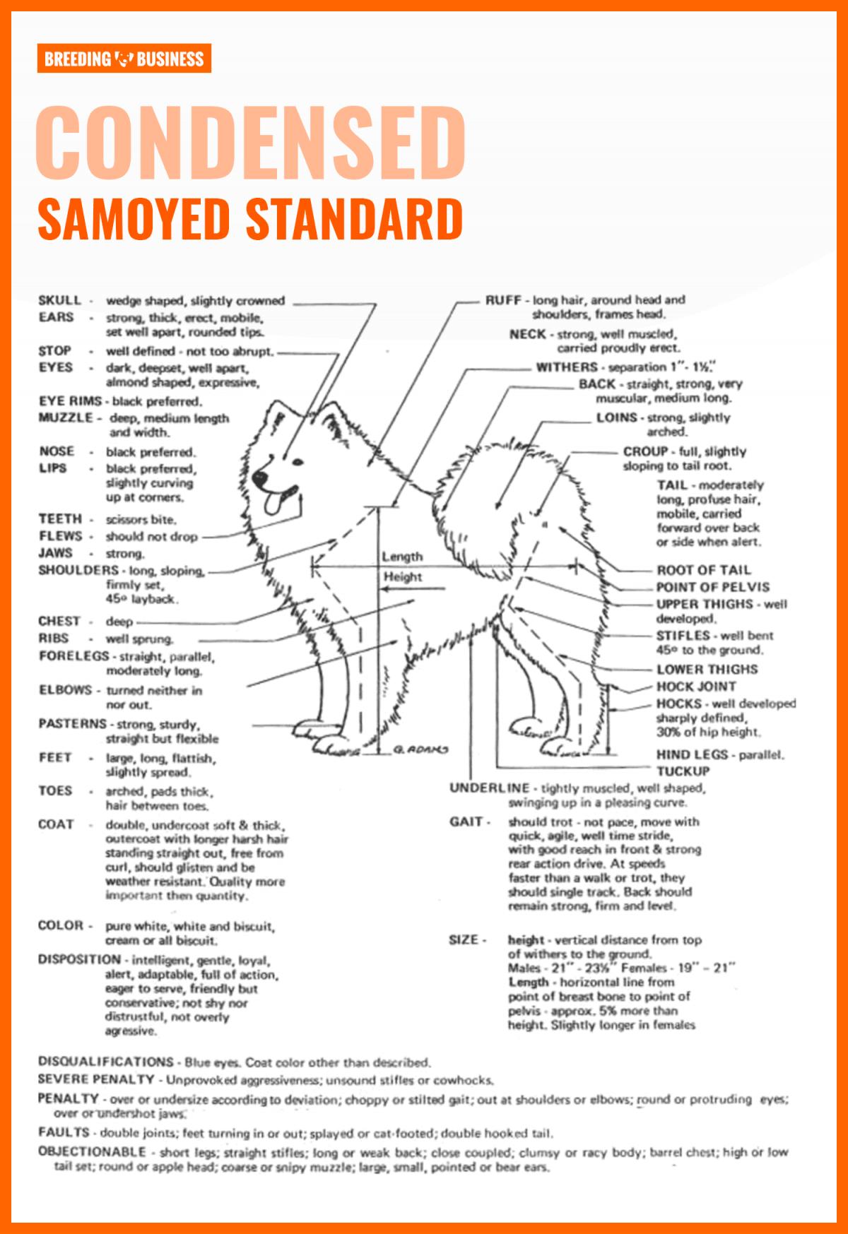 Samoyed standard chart