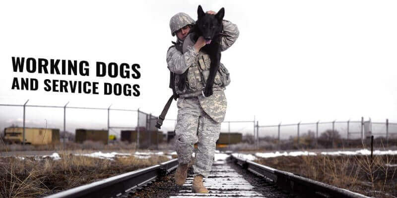 Types Working Dogs and Service Dogs