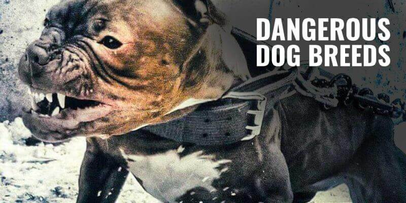 dangerous dog breeds