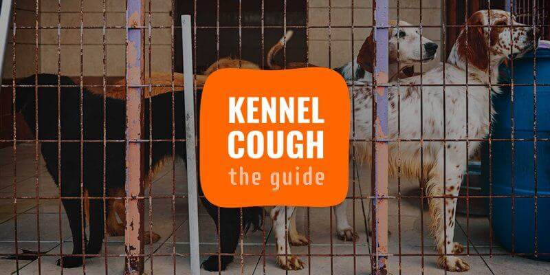 kennel cough dogs