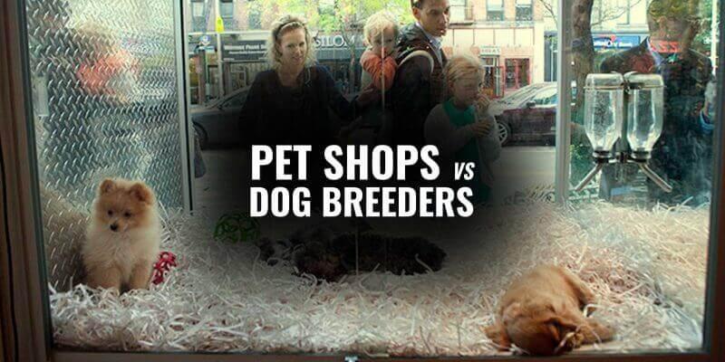 pet stores vs dog breeders