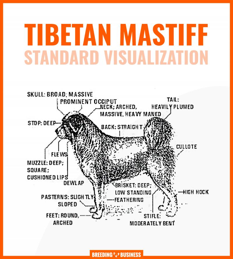 tibetan mastiff standard