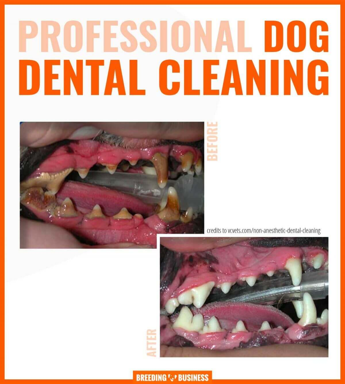 professional dog dental cleaning