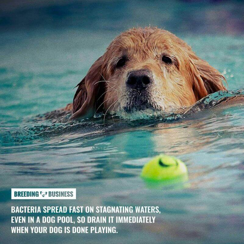 cleaning a dog pool