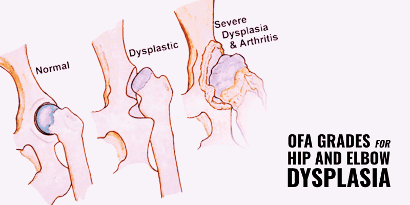 ofa grades dysplasia