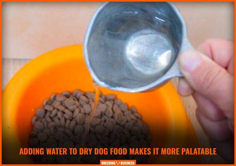 mixing water with dry dog food