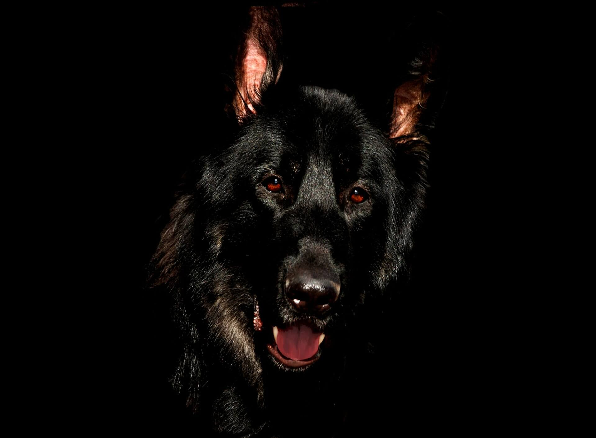 200 Black Dog Names Perfect For All Black Dogs And Dark Coats