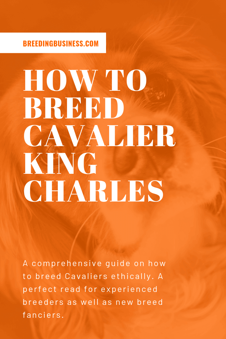 breeding cavalier king charles spaniels