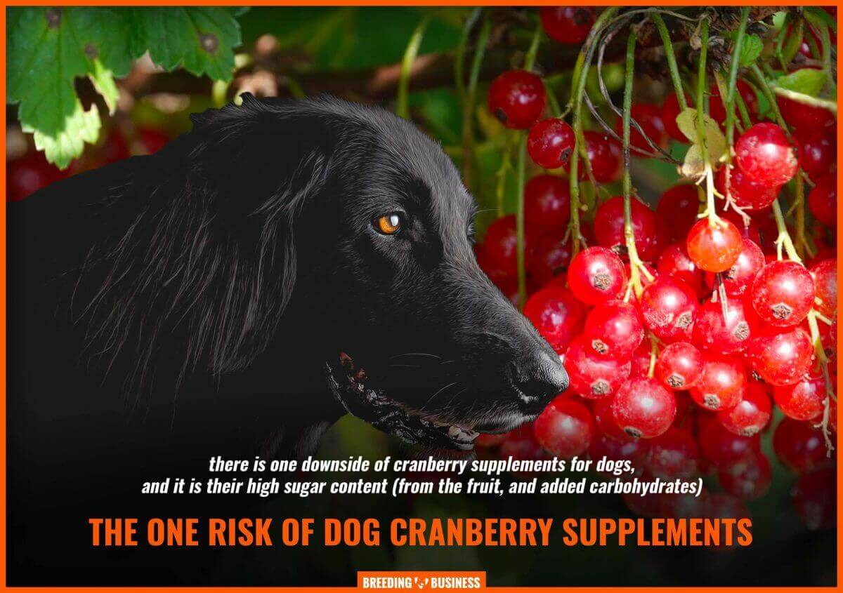 sugar in dog cranberry supplements
