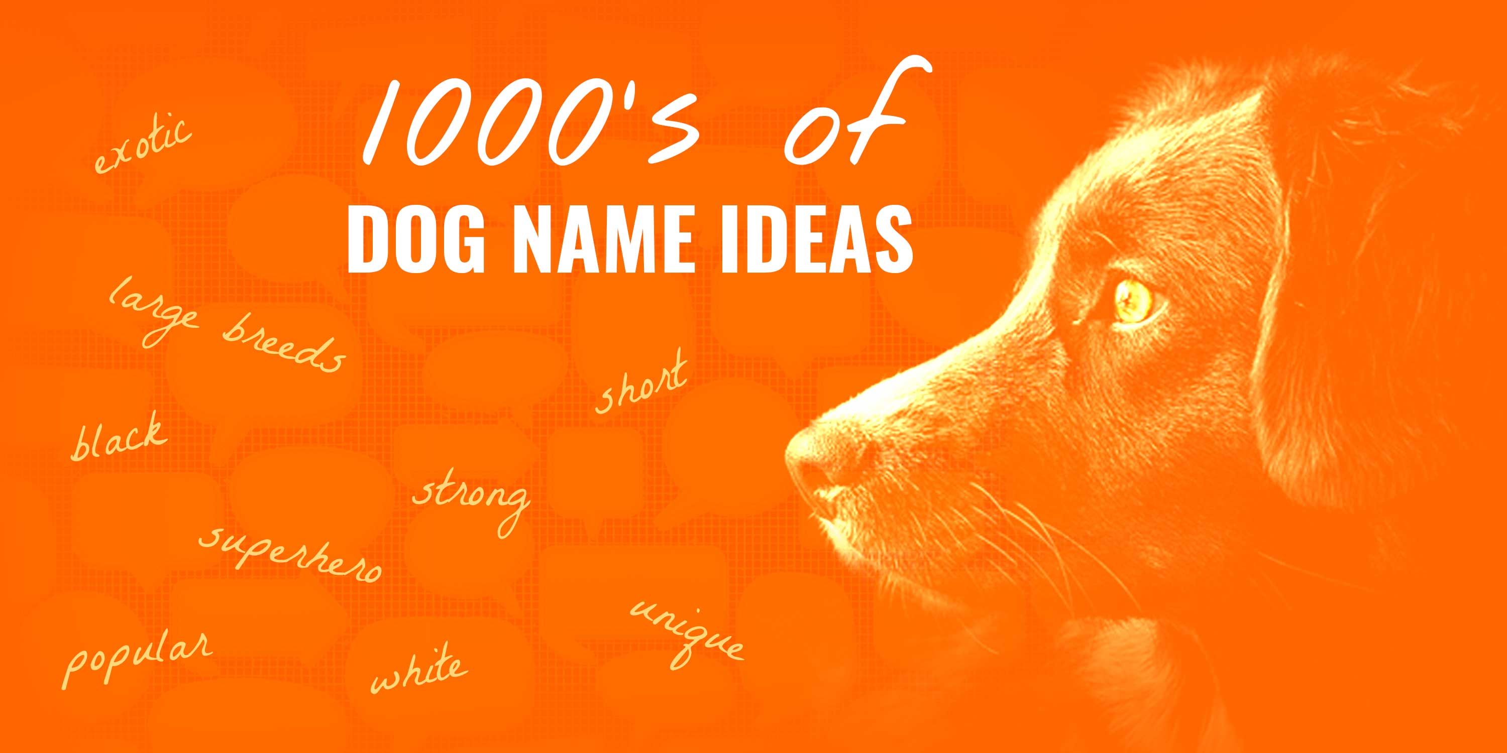 1000 S Of Dog Names For New Puppy Owners Dog Name Center