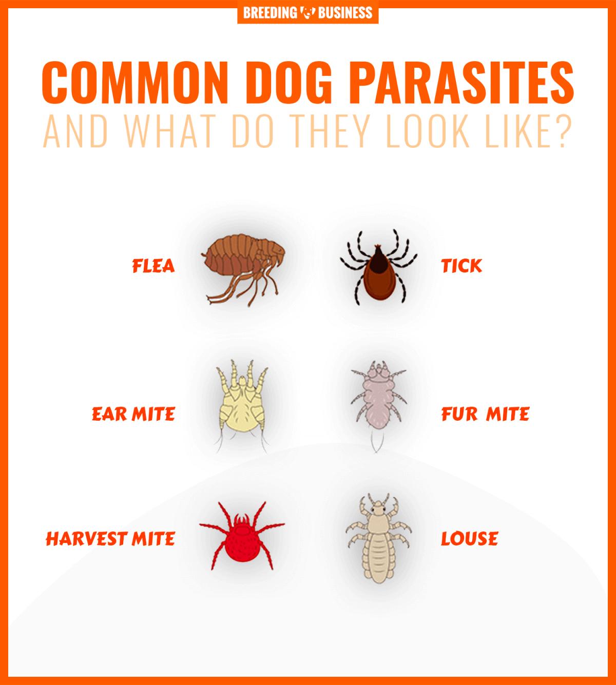 list of dog parasites