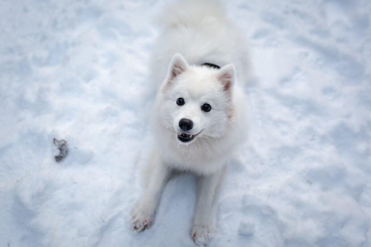 White Dog Names Over 150 White Snow Ice Inspired Ideas