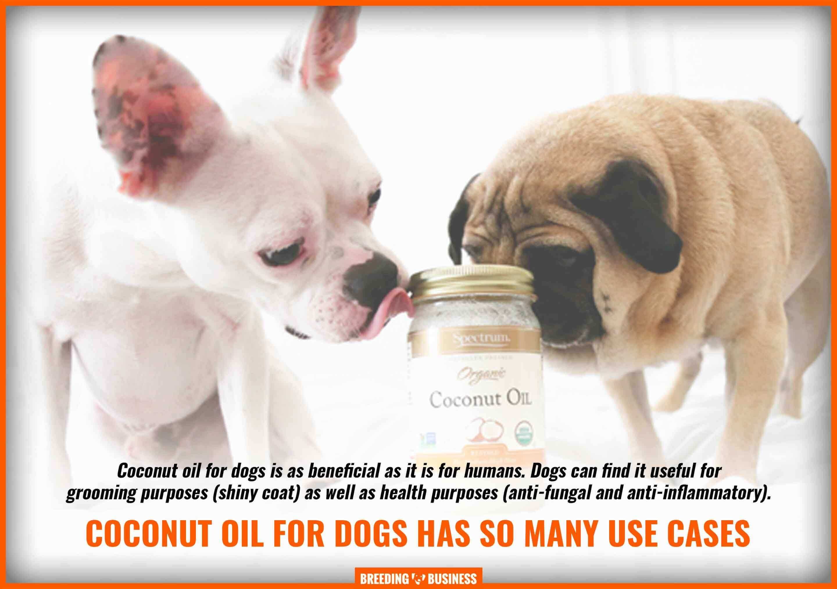 benefits coconut oil for dogs