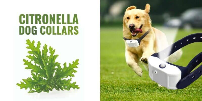 Best Citronella Dog Collars