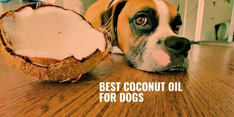 best coconut oil for dogs