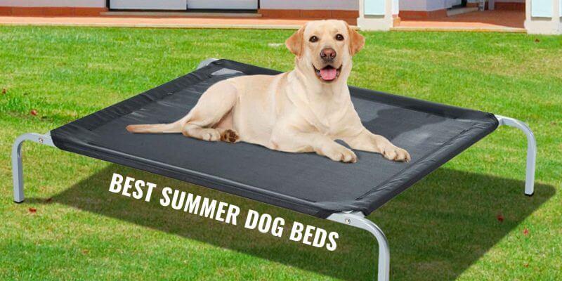 best summer dog beds