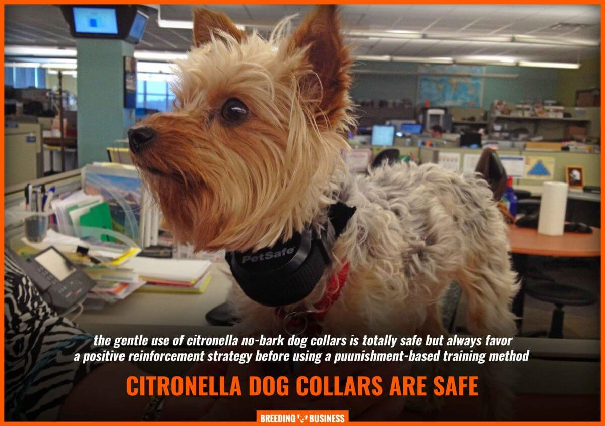 citronella dog collar safety