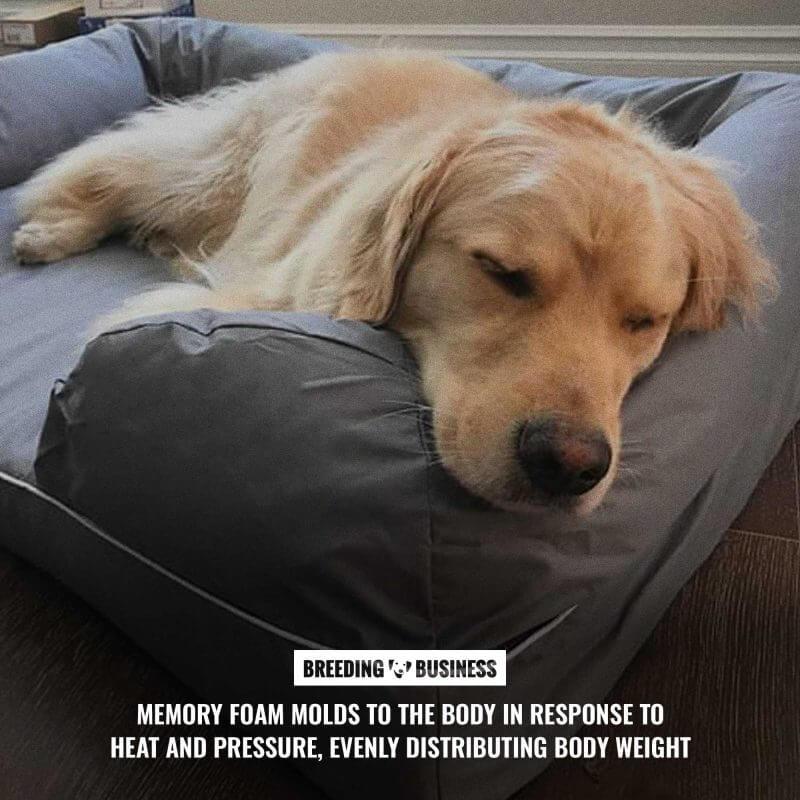 memory foam orthopedic dog beds