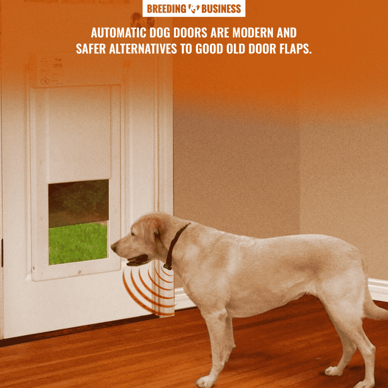 automatic and electronic dog doors for large dogs