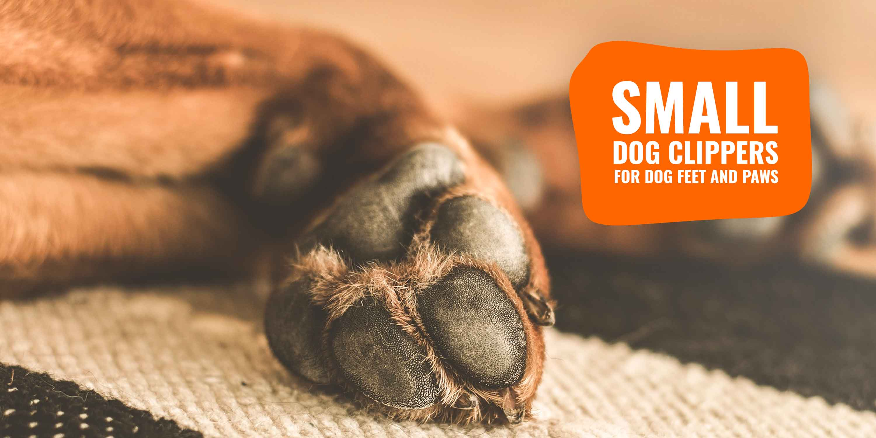11 Best Small Clippers for Dog Feet and Paws – with Buying Guide!