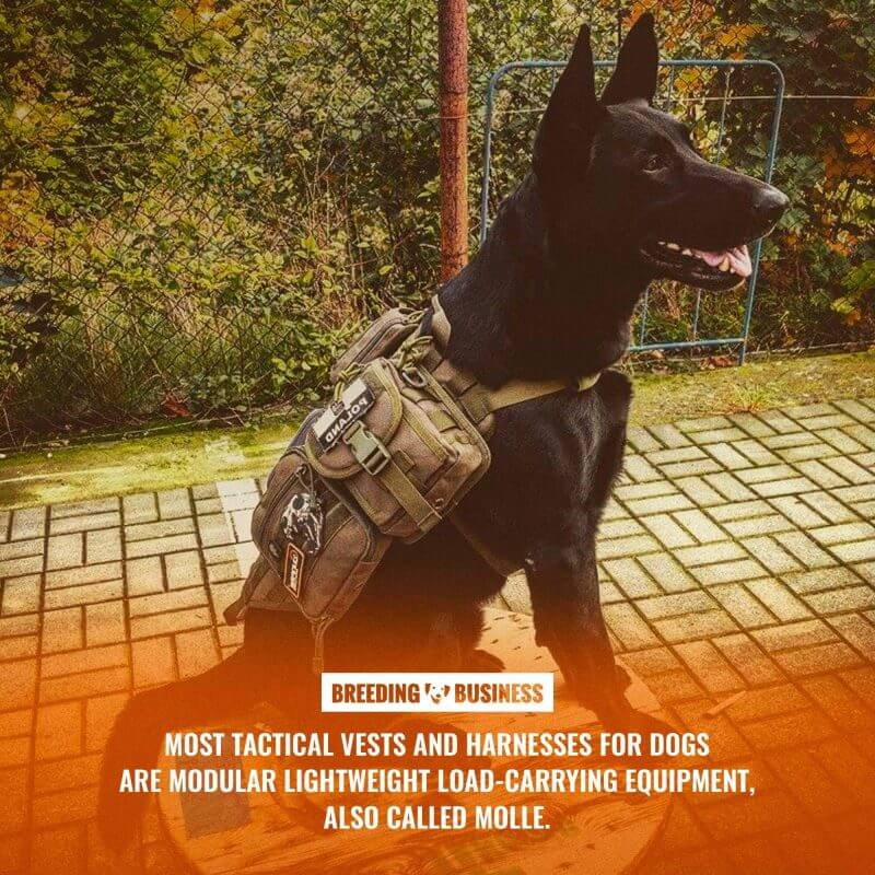 tactical dog harness (molle)