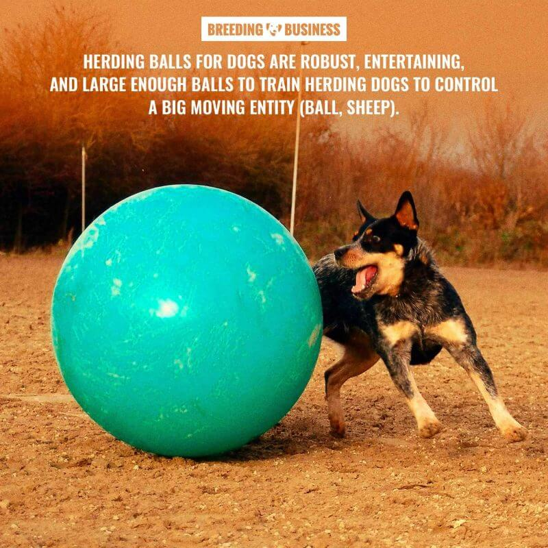 what is a dog herding ball