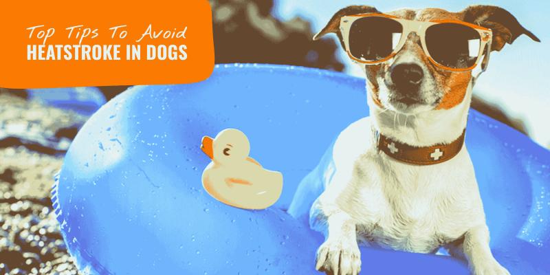 prevent heatstroke in dogs