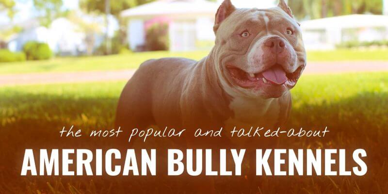 Top 10 American Bully Kennels From Kurupt And Remyline To Nakamoto