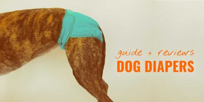 best dog diapers
