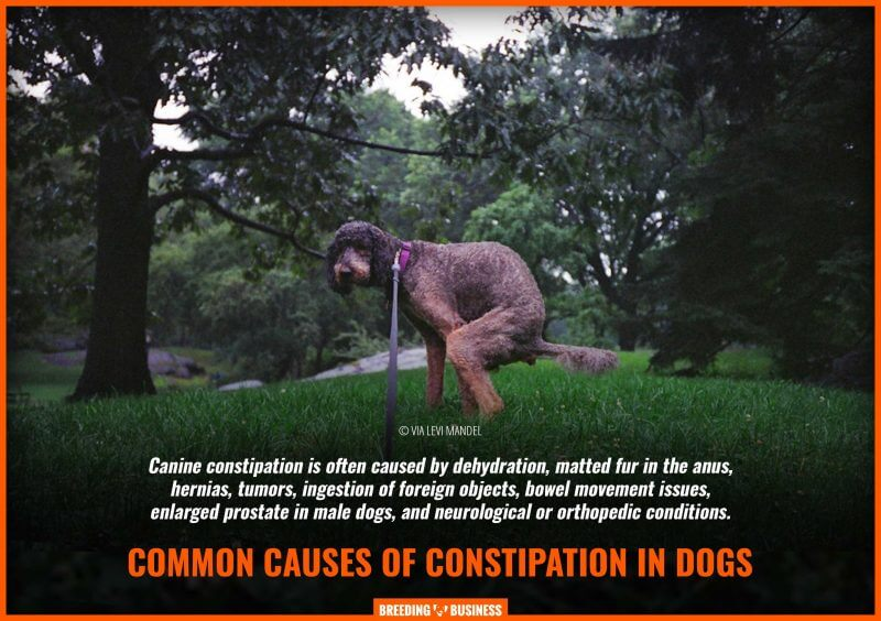 causes of constipation in dogs