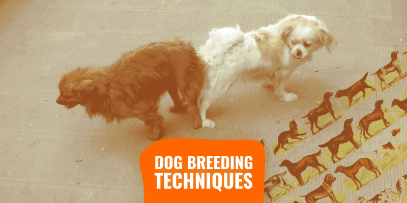 dog breeding techniques and methods