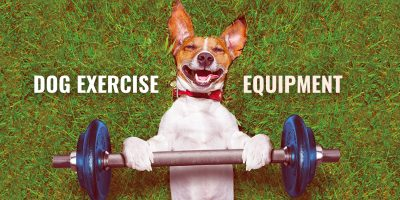 dog exercise equipment and dog workout kit