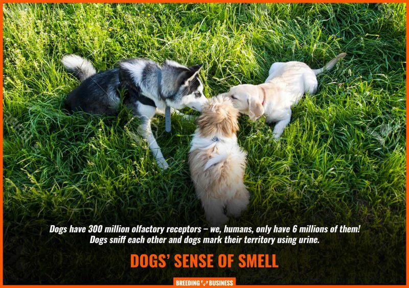 dogs smelling each other
