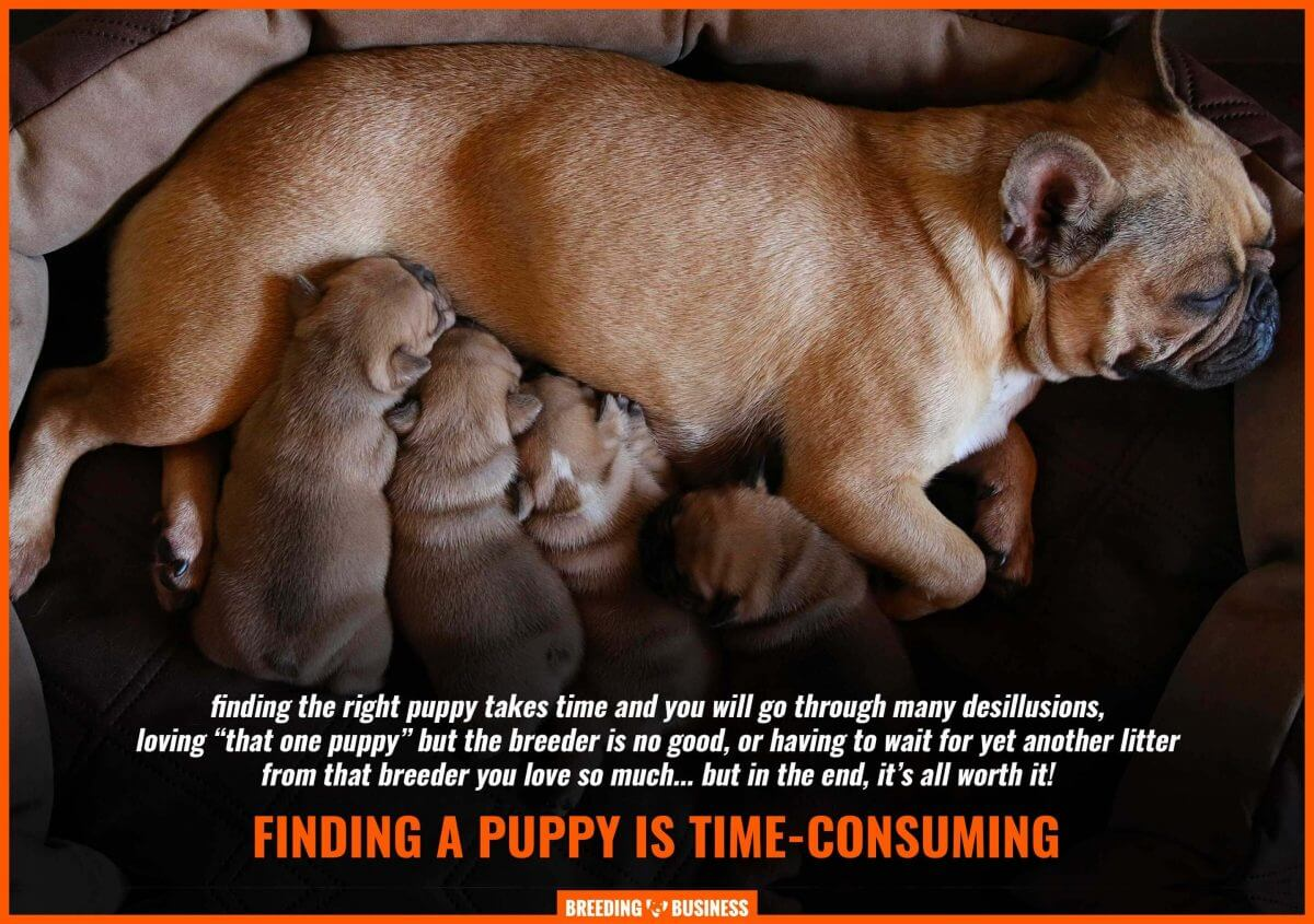 finding a puppy