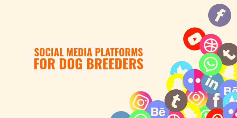 social media for dog breeders