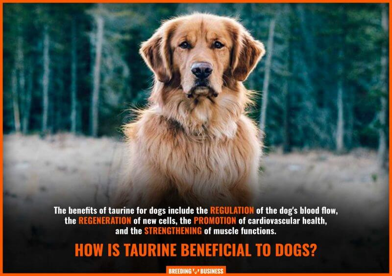 benefits of taurine for dogs