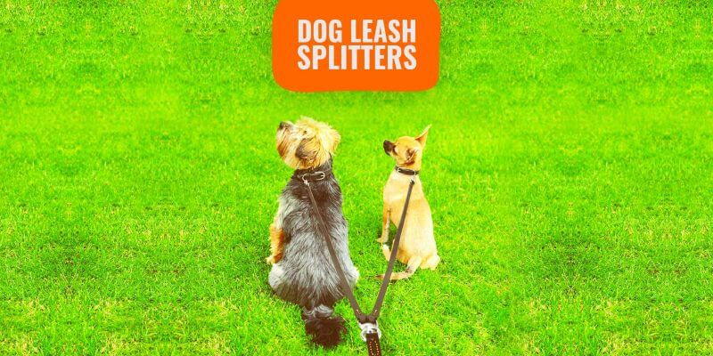 best dog leash splitters