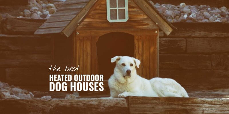 7 Best Heated Outdoor Dog Houses