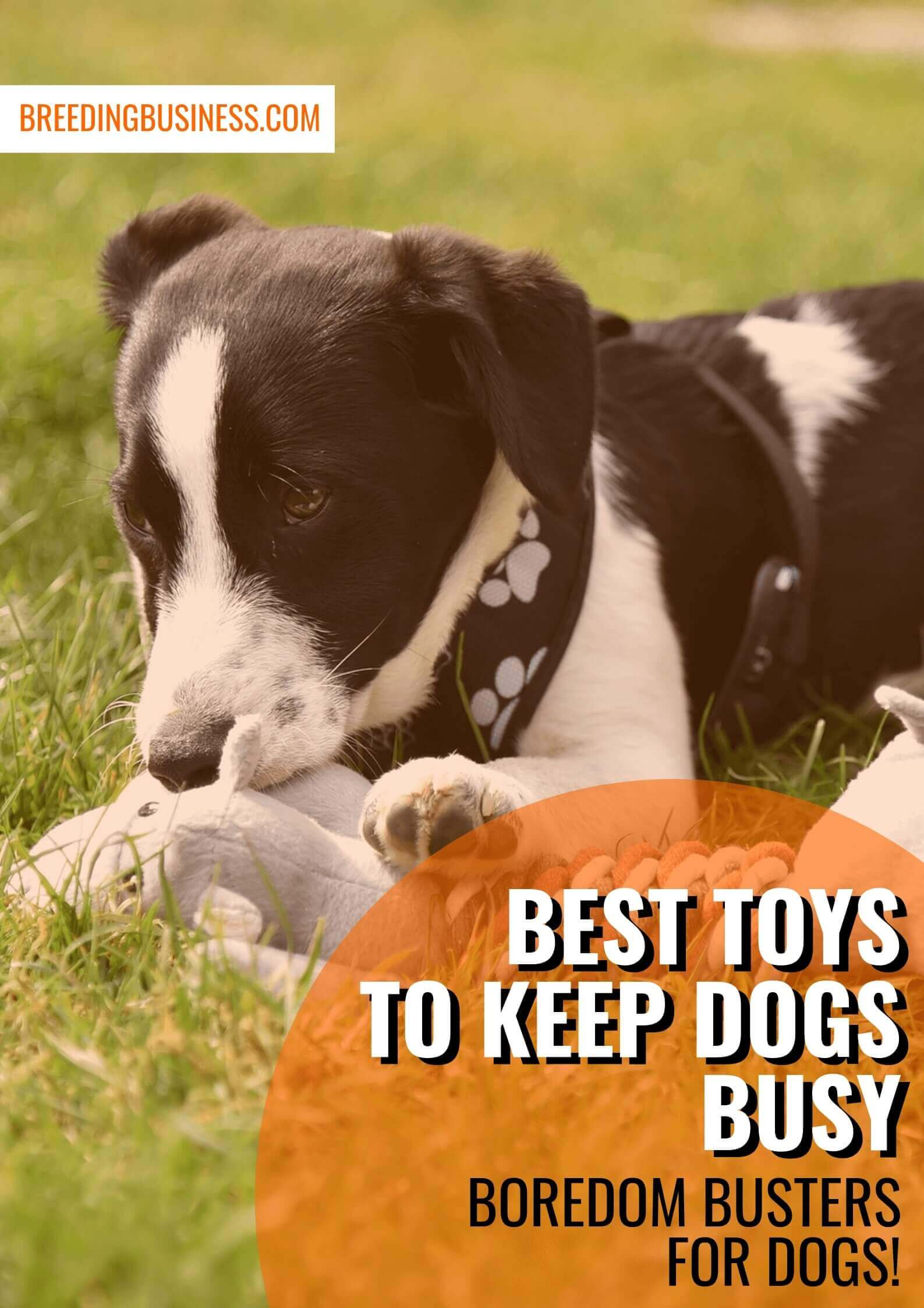 best toys to keep dogs busy