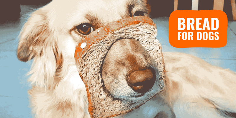 bread for dogs