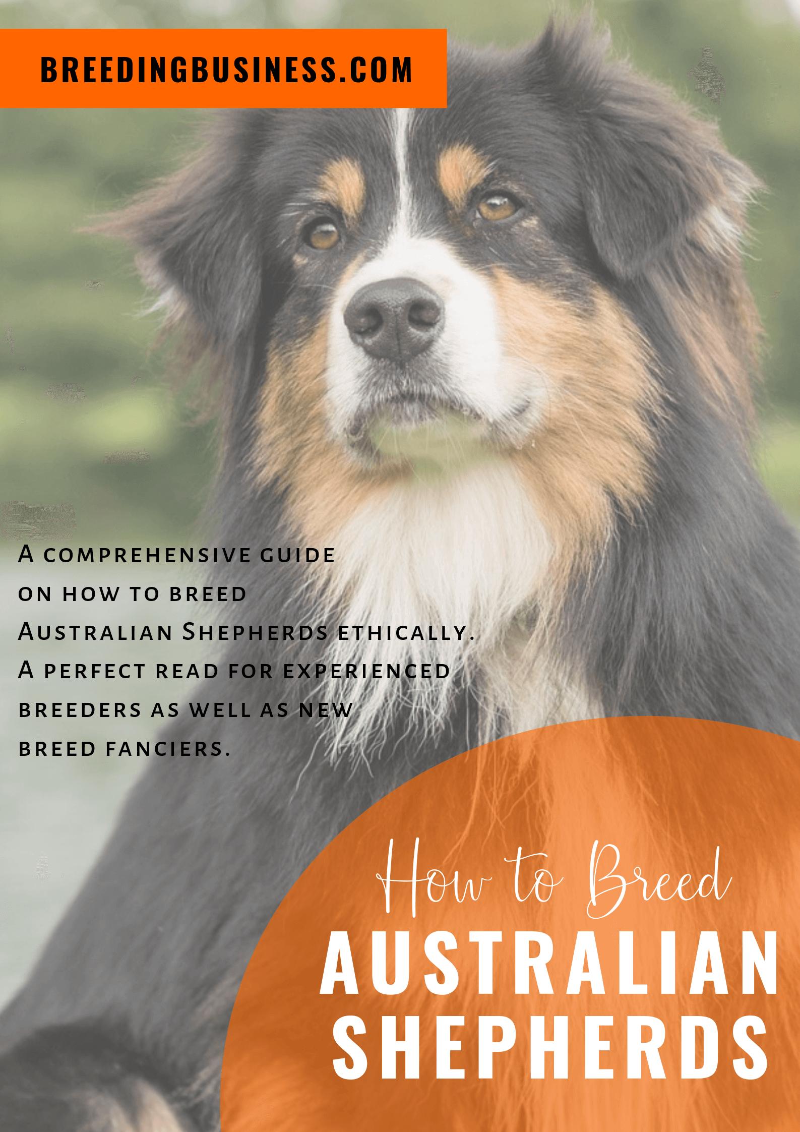 breeding Australian Shepherds