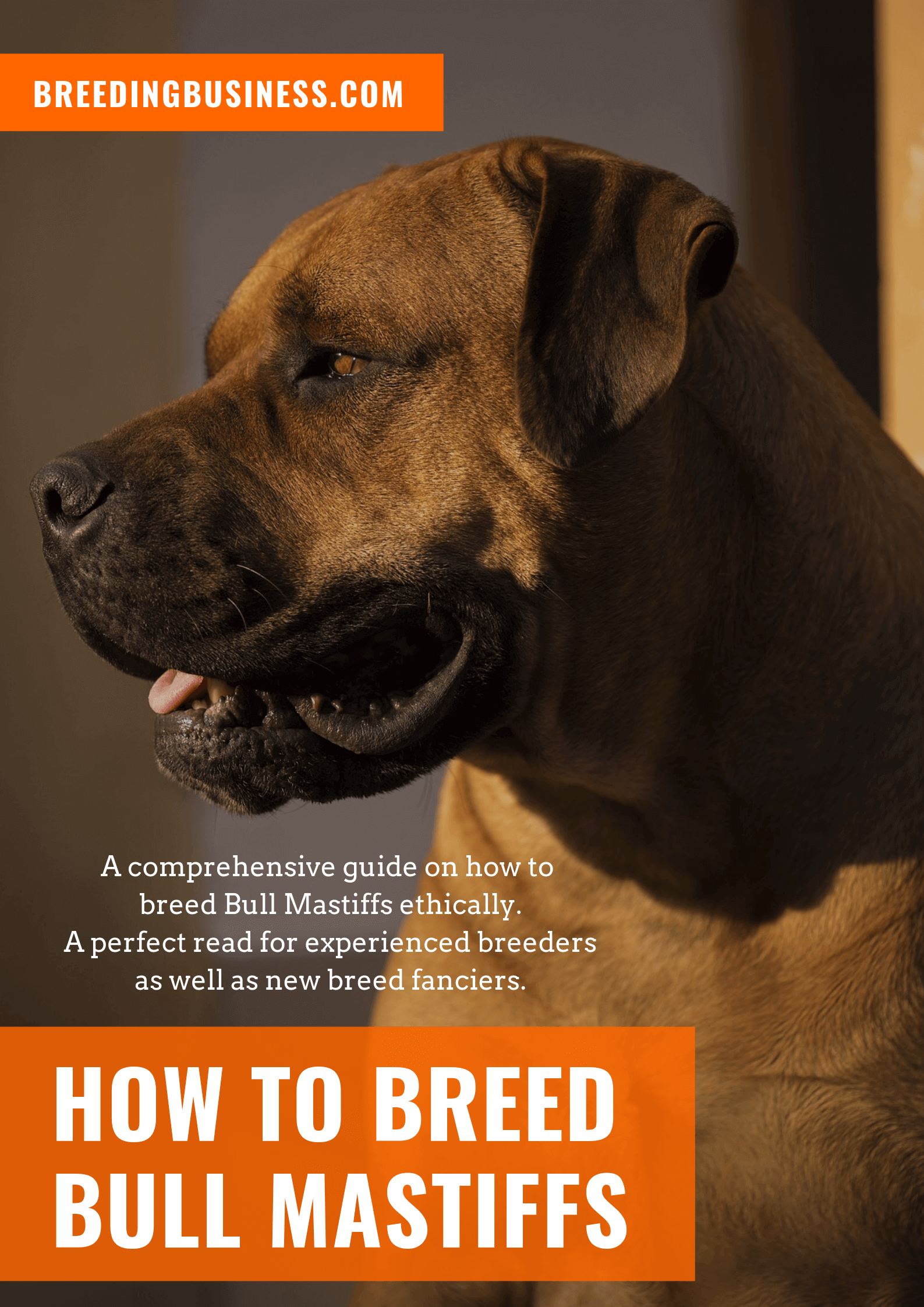 breeding Bull Mastiffs