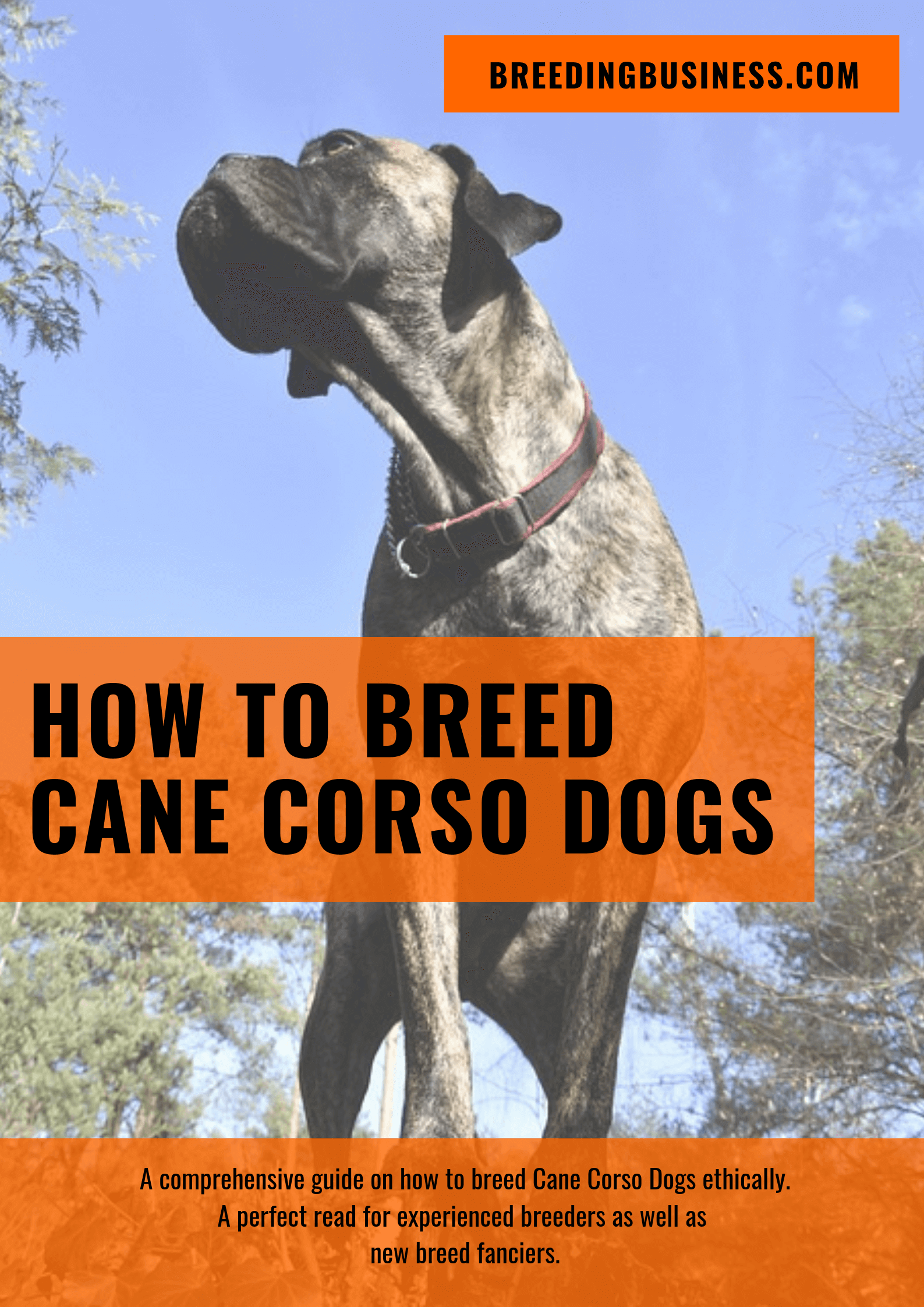 breeding Cane Corsos
