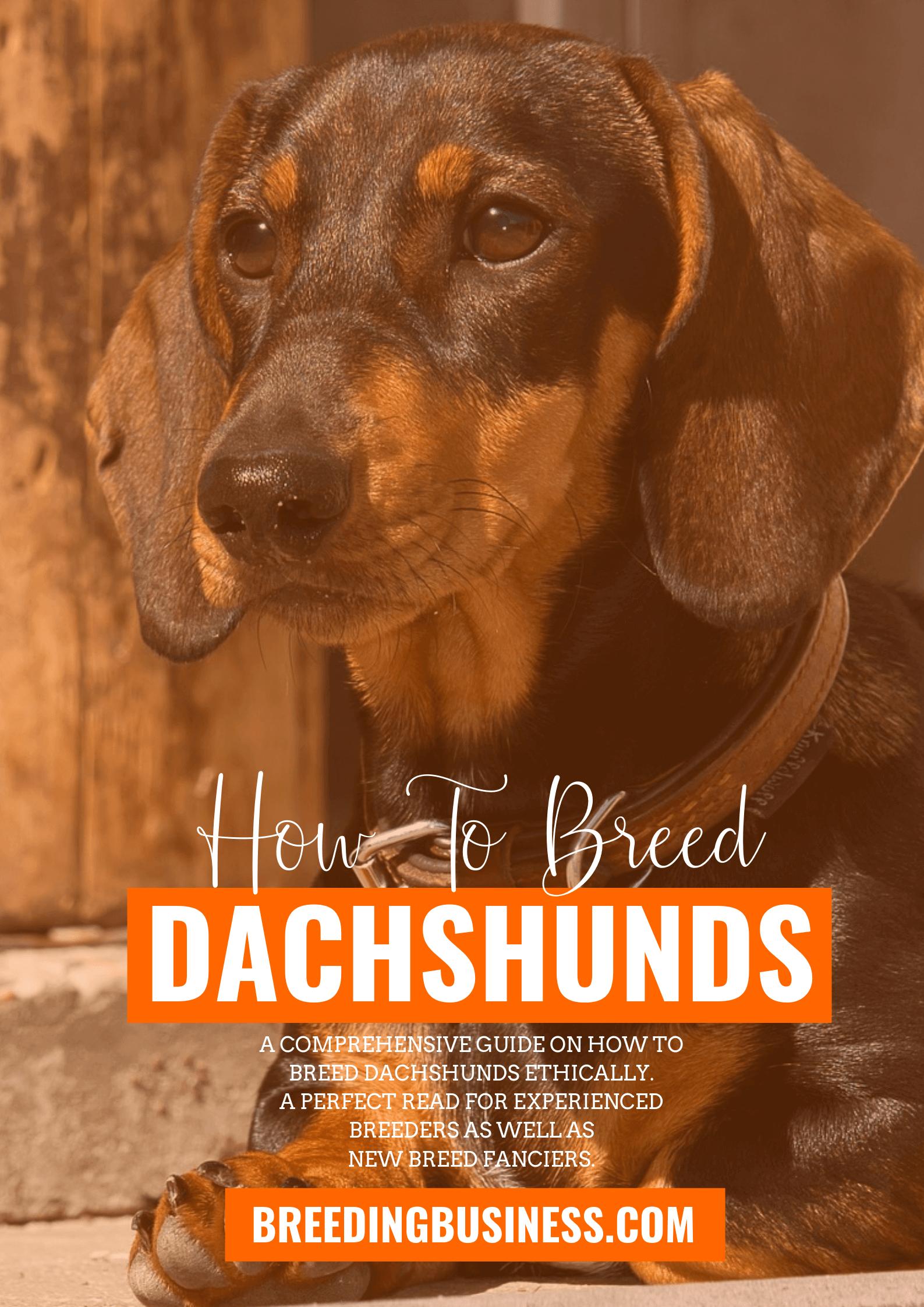 breeding Dachshunds