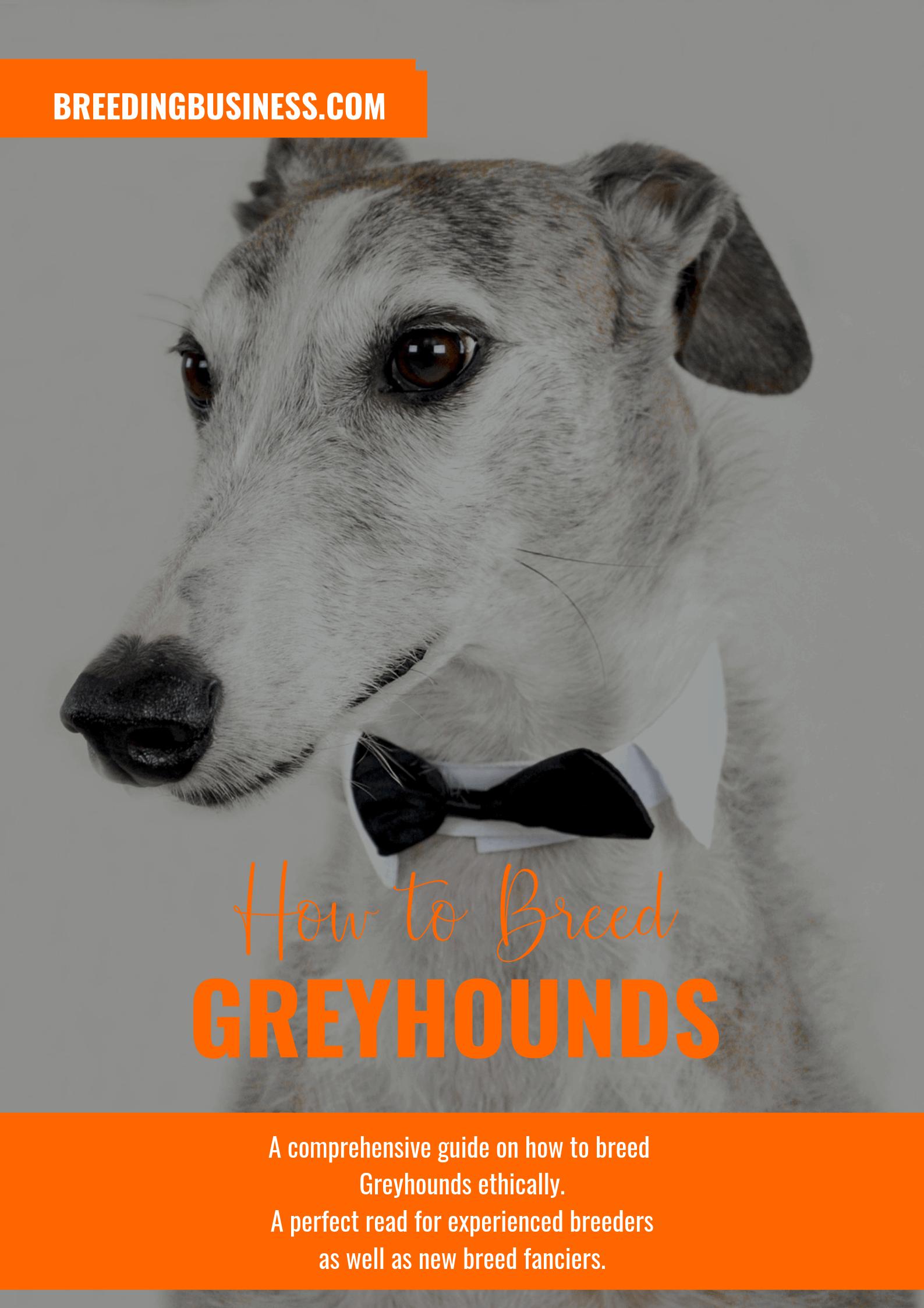 breeding Greyhounds